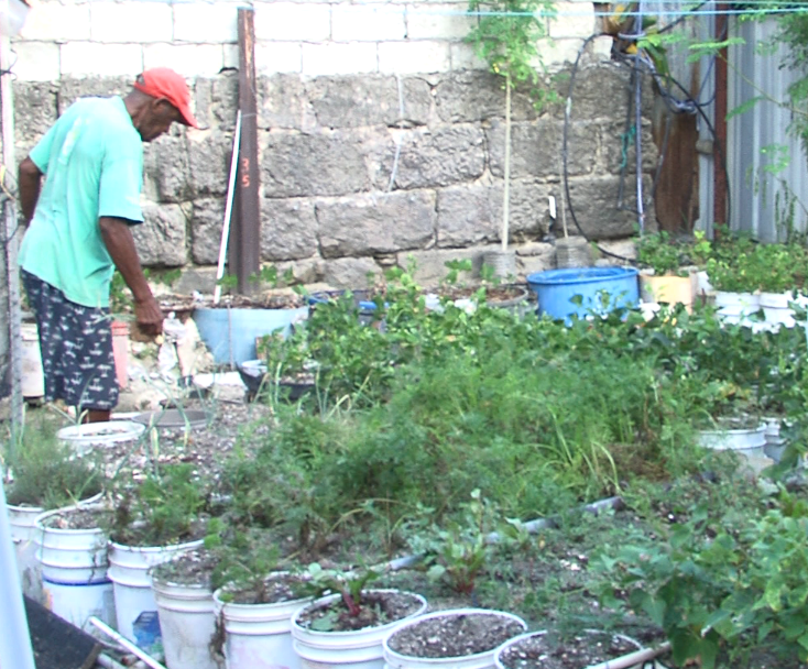 Cavendish Atwell loves gardening and enjoys giving away his produce.